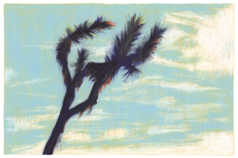 cactus sur ciel bleu et nuages