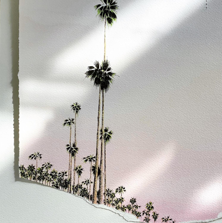 ciel rose pâle palmiers ombres