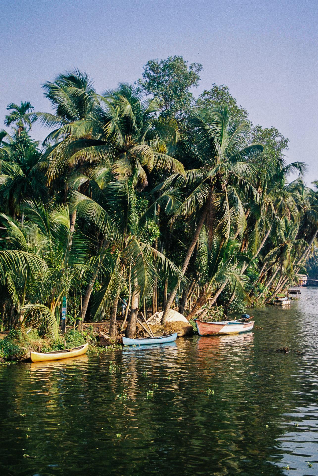 barques colorés accostés le long d'une rive recouverte de palmiers