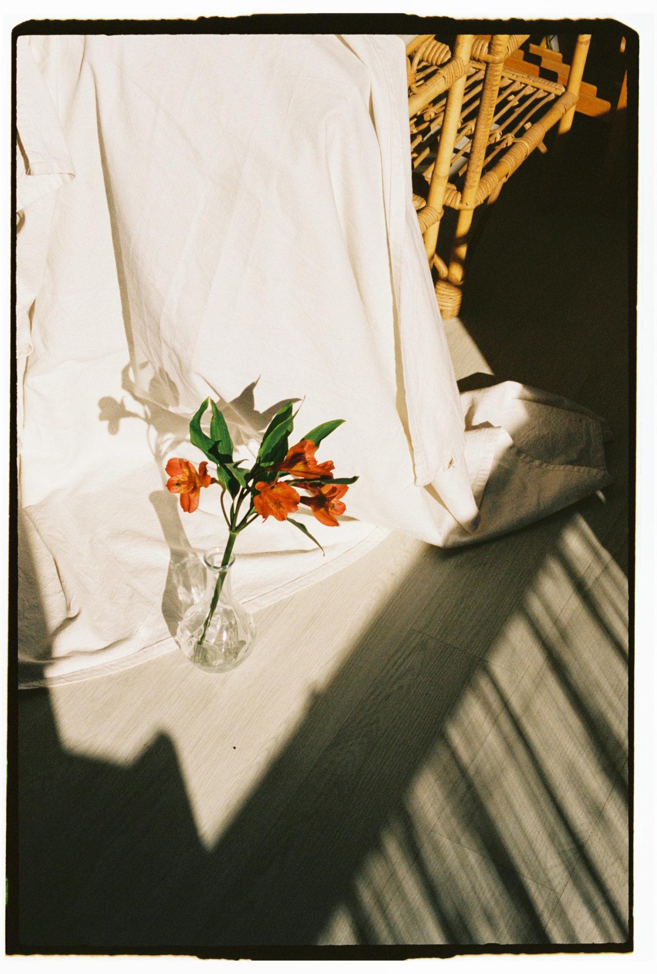 tige de fleur rouge devant un drap blanc avec un jeu d'ombre